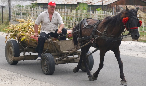 Traditional horse and cart, sadly being replaced by more and more cars in Romania