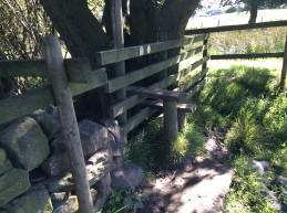 The fifth stile, not a squeeze style but a 'climb over'