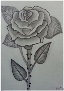 Drawing of a rose, with thornd
