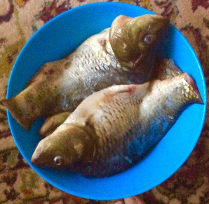 A picture of some small carp in a bowl, prepared for cooking