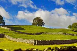 Some of the near white drystone walls dividing green fields in the Wharfe valley between Burnsall and Grassinton